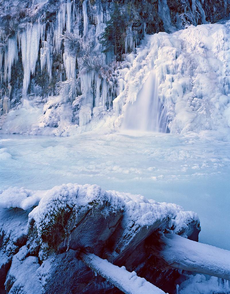 Las zimą okryty śniegiem.