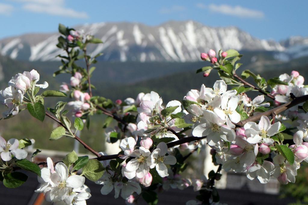 Gałązka kwitnącej wiśni, którą dekoruje górskie tło. Zima daje o sobie znać na góskich szczytach.
