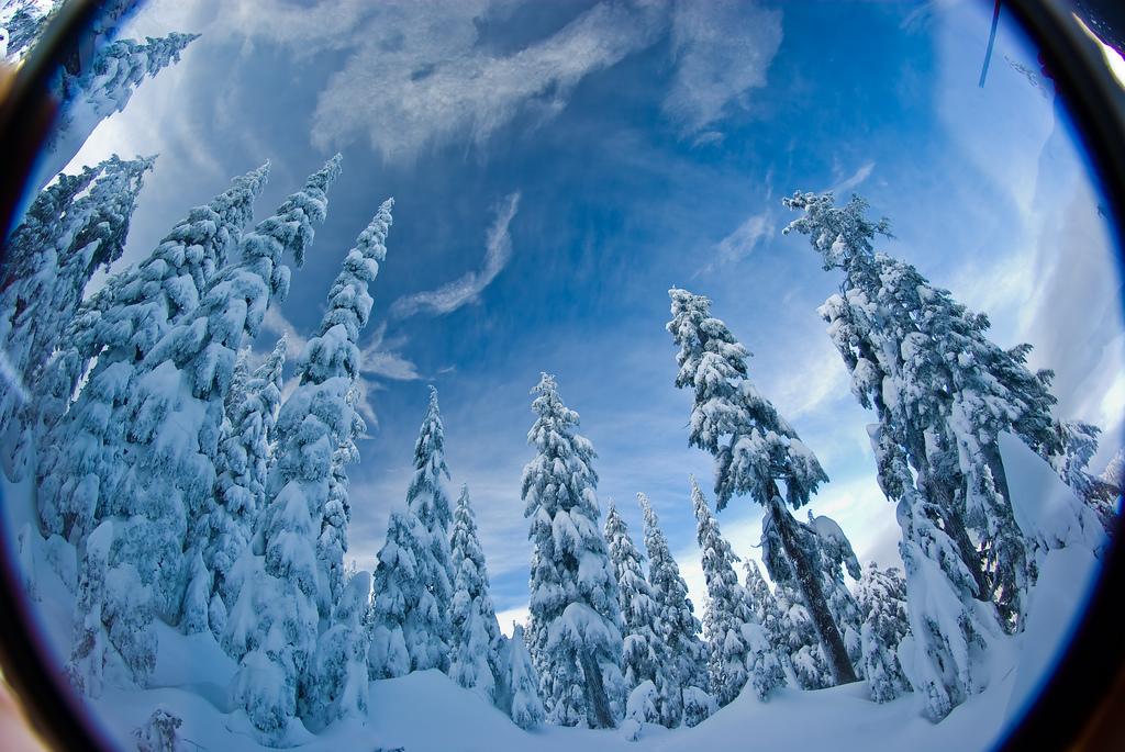 Piękny zimowy krajobraz. Płachta śniegu delikatnie otula górkie sosny.