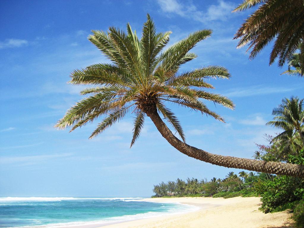 Słoneczna plaża z palmami