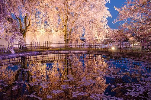 ogrod-zamek-himeji-japonia