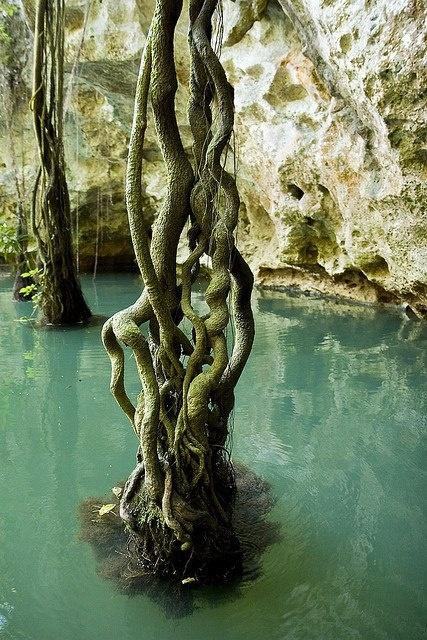 Wnętrze jaskini Barton Creek